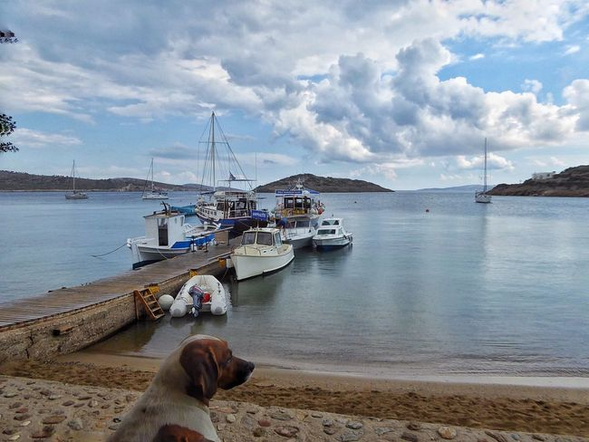 Marathi It's A Dogs Life ❤ It's Adogs Life Its A Dogs Life GREECE ♥♥ Greece Dodecanese Seascape Seascape Photography Seascapes SeaScapePhotography Reflections In The Water