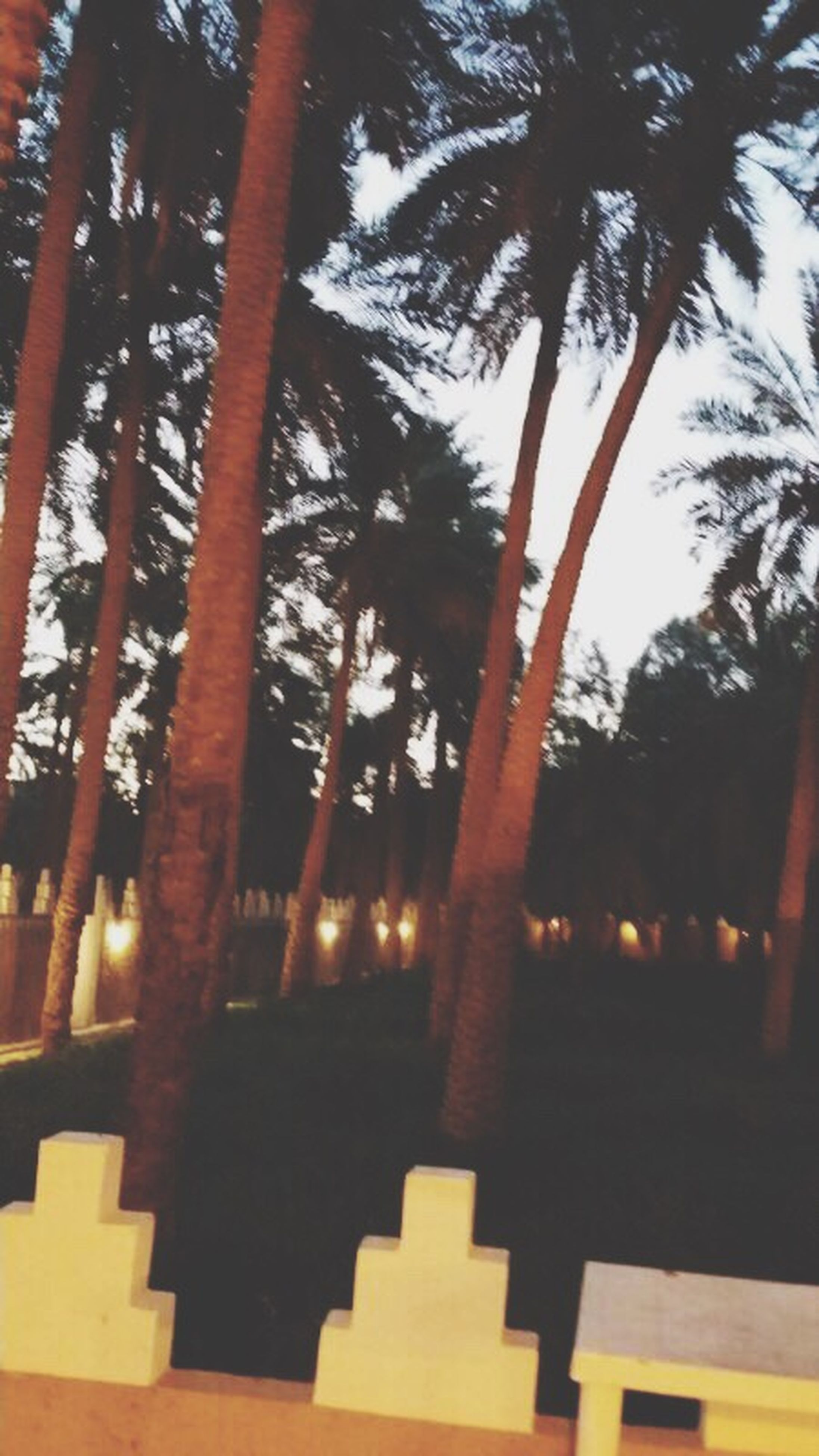 tree, low angle view, sunlight, palm tree, growth, built structure, tree trunk, silhouette, architecture, shadow, branch, no people, nature, illuminated, sky, tranquility, wood - material, outdoors, sunset, day