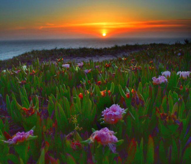 A San Francisco sunset... Sunrise_sunsets_aroundworld Sunset