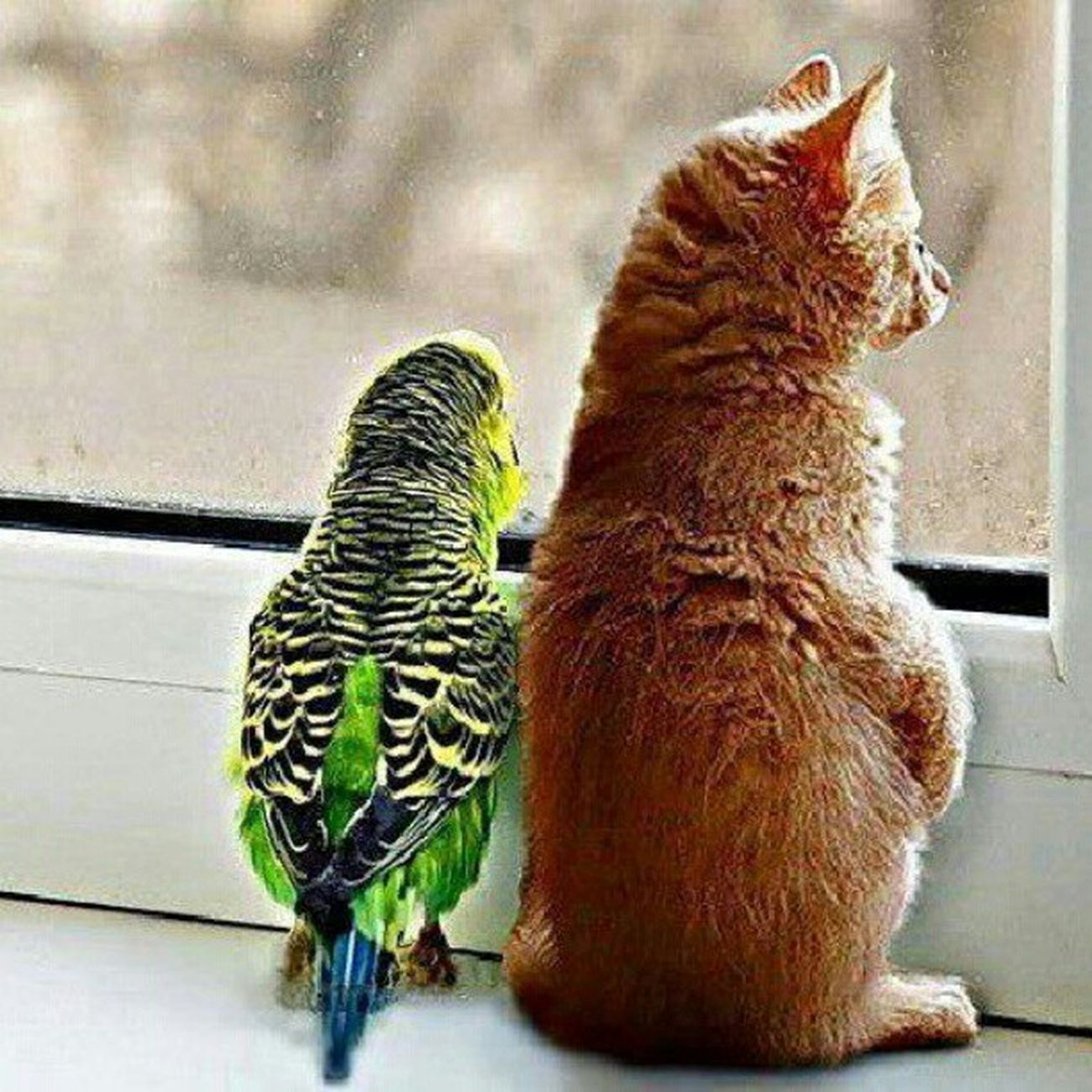 Bird Underlat Animal Cat cute forest sun summer window