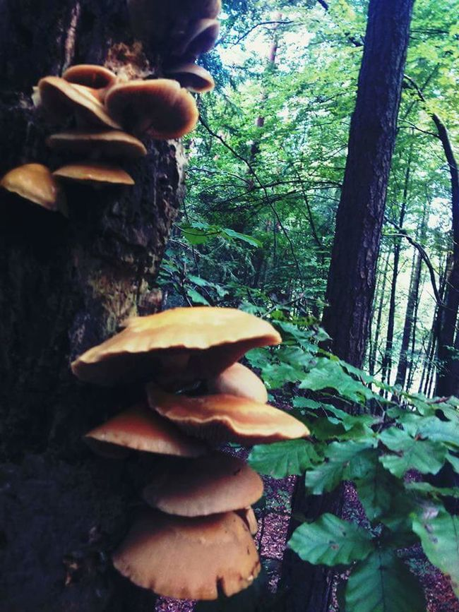 Forest Tree Mushroom Withouteffect Freshness Nature Outdoors First Eyeem Photo