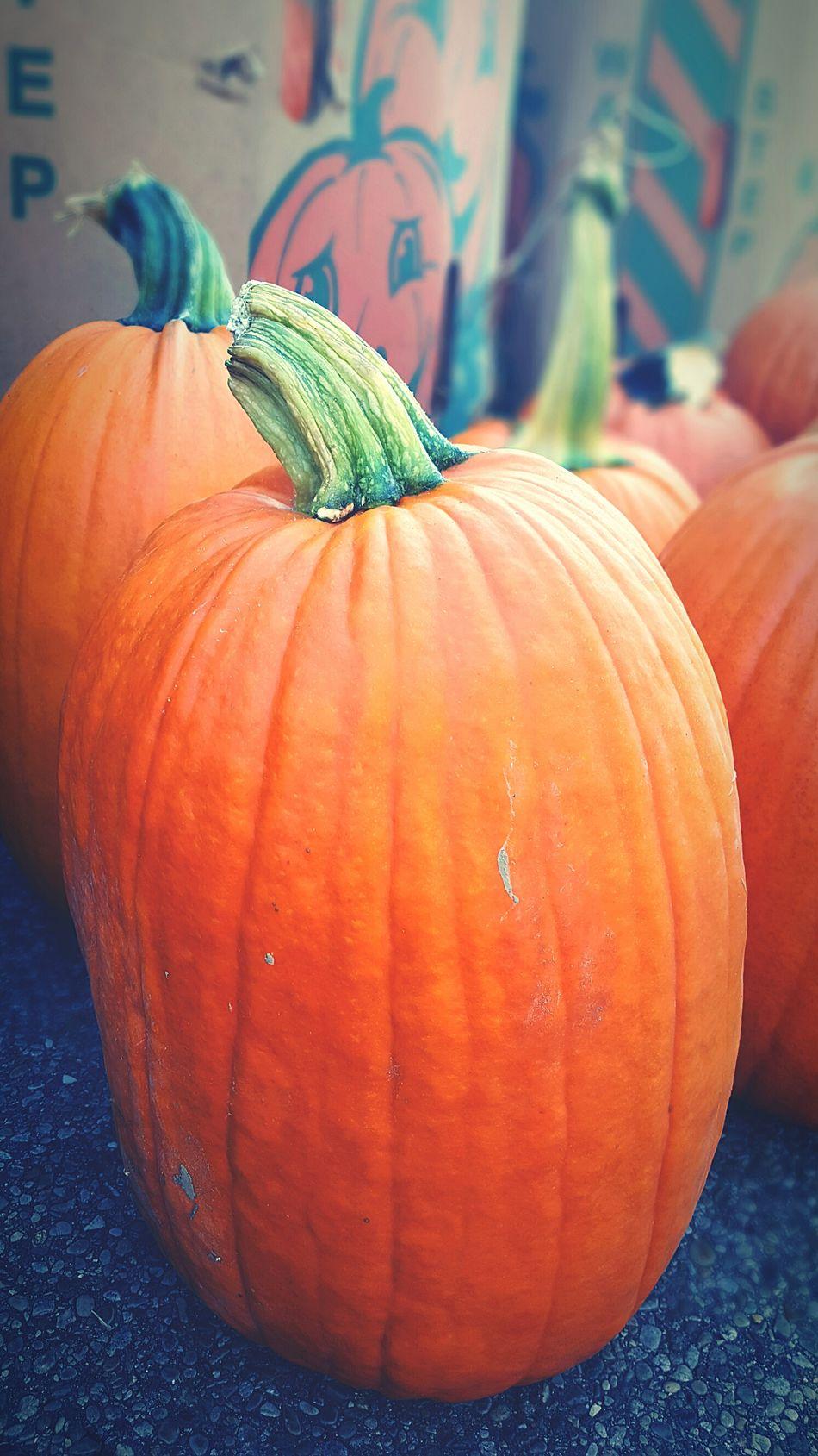 Pumpkin Pumpkin Festival Festival Fall