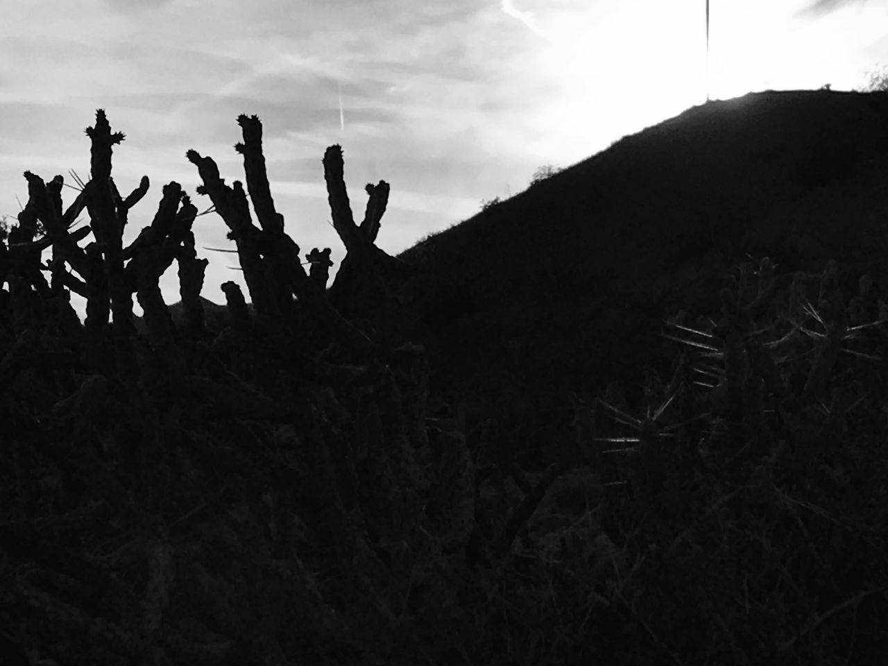 Growth Outdoors Nature Blackandwhitephotography Cactus Collection Desert Flora EyeEm Nature Lover Close-up Contrast/exposure Messing Around