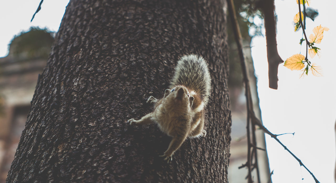 tree trunk, animals in the wild, animal themes, squirrel, one animal, animal wildlife, nature, day, outdoors, tree, no people, mammal, close-up