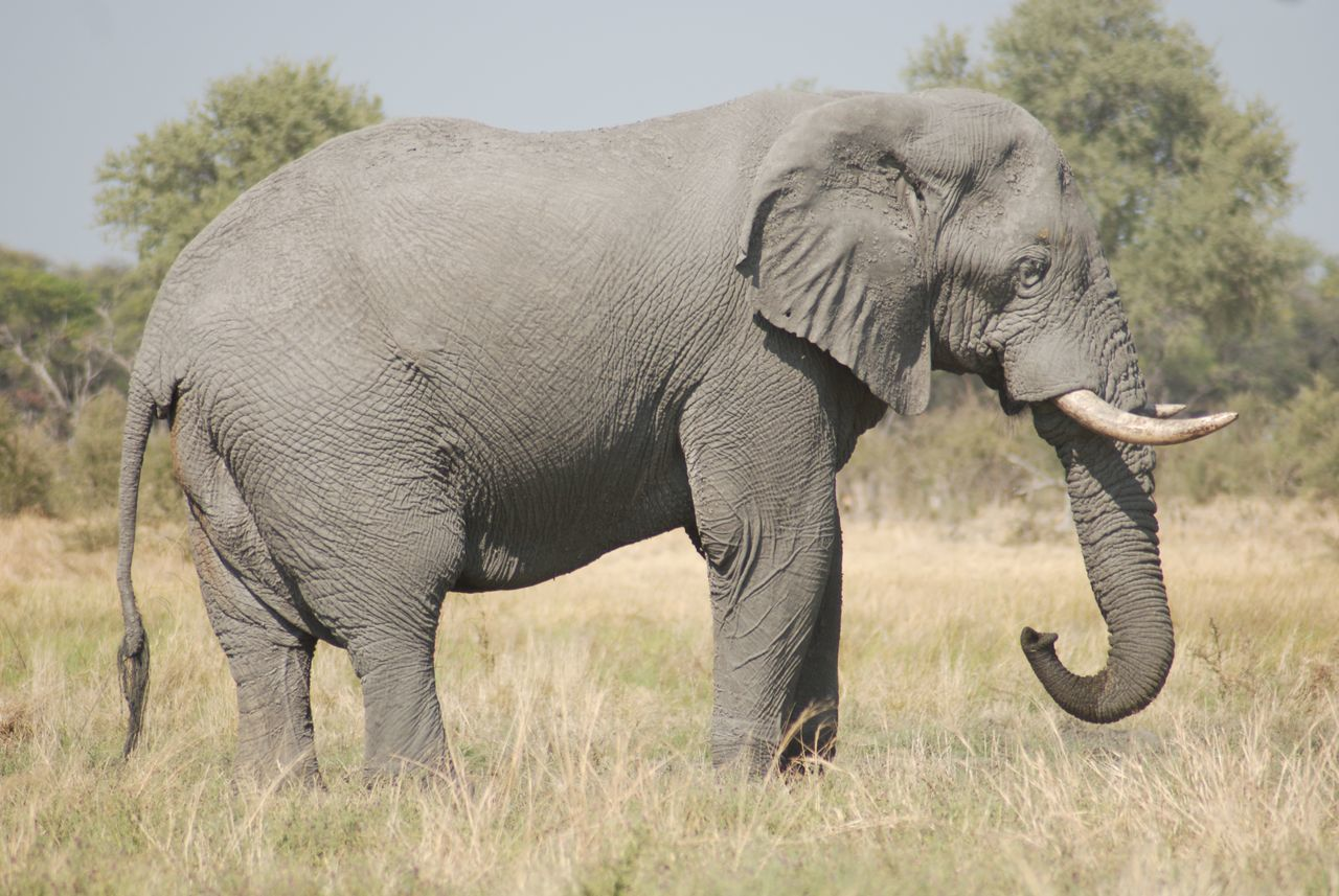Etosha Safari Namibia Africa Elephant Trunk Animals Wildlife & Nature EyeEm Nature Lover No People African Safari