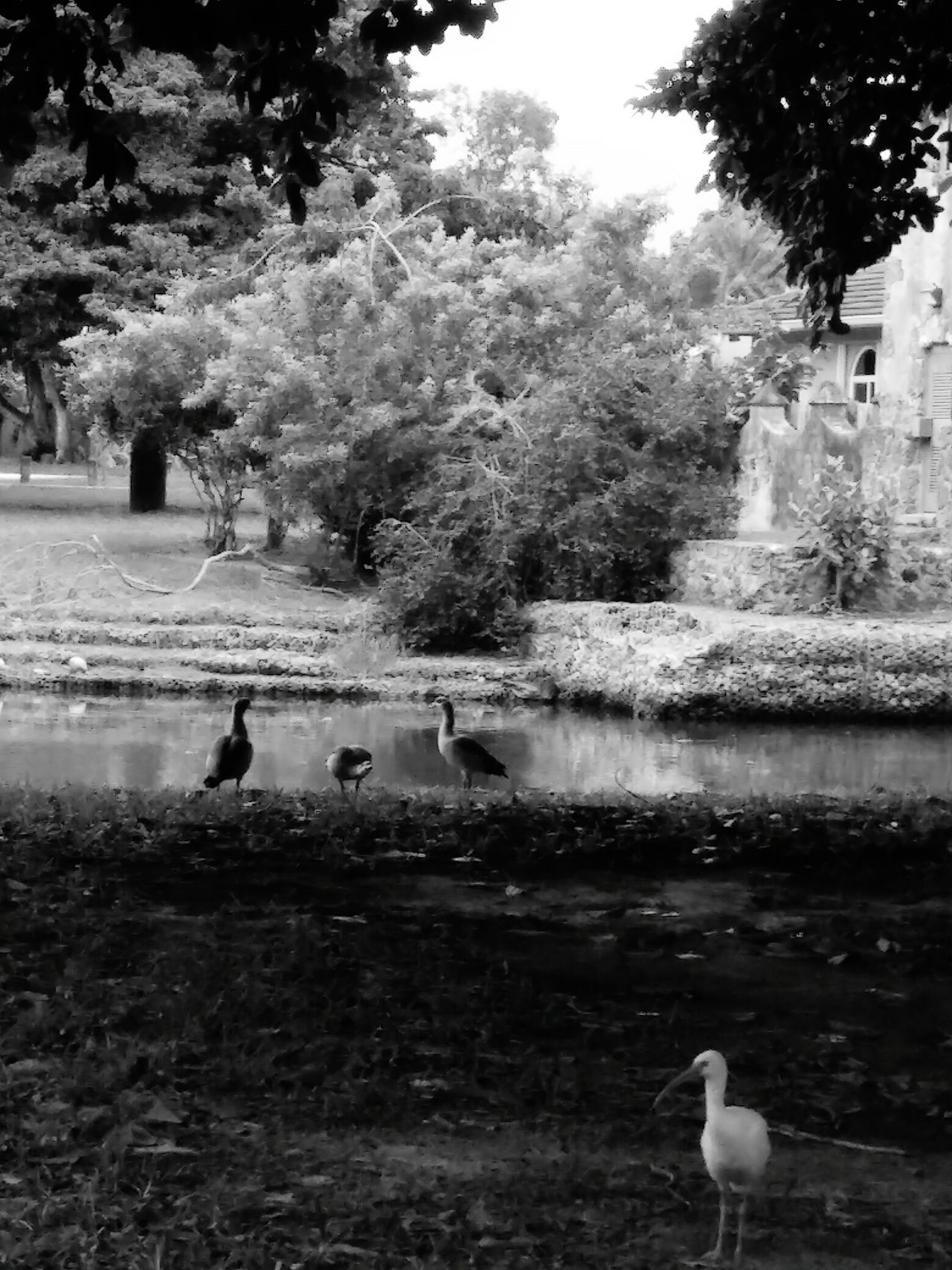 Bird Photography Naturelovers Natur!! Canals And Waterways