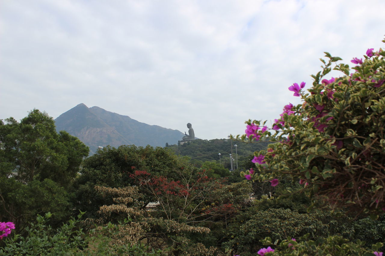 Flower Tree Mountain Nature Beauty In Nature Landscape Plant Sky Scenics Outdoors No People Cloud - Sky Travel Destinations Fragility Day HongKong Travel Photography Tian Tan Buddha (Giant Buddha) 天壇大佛 Travel Statue