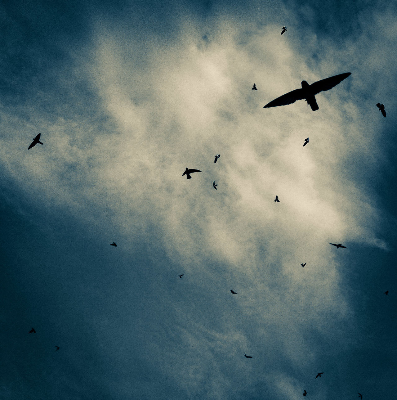 INDONESIA Sky_collection Cloud Birds In Frame Photo Of The Day EyeEm Gallery Silhouette Birds