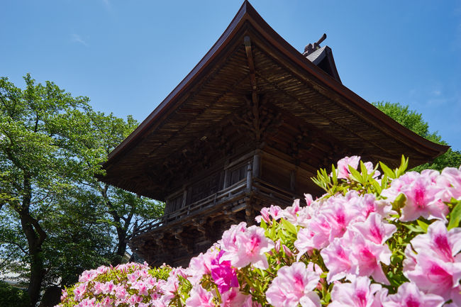 Architecture Azalea Beauty In Nature Built Structure Flower Growth Japan Low Angle View Nature No People Plant Sky Temple
