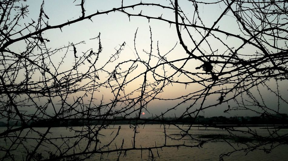 Traveling Travel Photography Sunrise Lovetravelling Love To Take Photos ❤ Love In The Air Nature Sunset No People Sky Tree Outdoors Beauty In Nature Close-up First Eyeem Photo Handmade For You