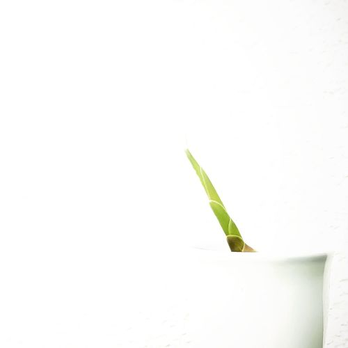 Ingwergewächs Ingwer Green Color Close-up Leaf Nature Plant White Background Outdoors Freshness Green Color Light And Shadow Minimalism Flower Simple Nature On Your Doorstep EyeEm Gallery Focus On Foreground EyeEm Best Shots Greenery EyeEm Green Leaves Green Green Green!  Growth