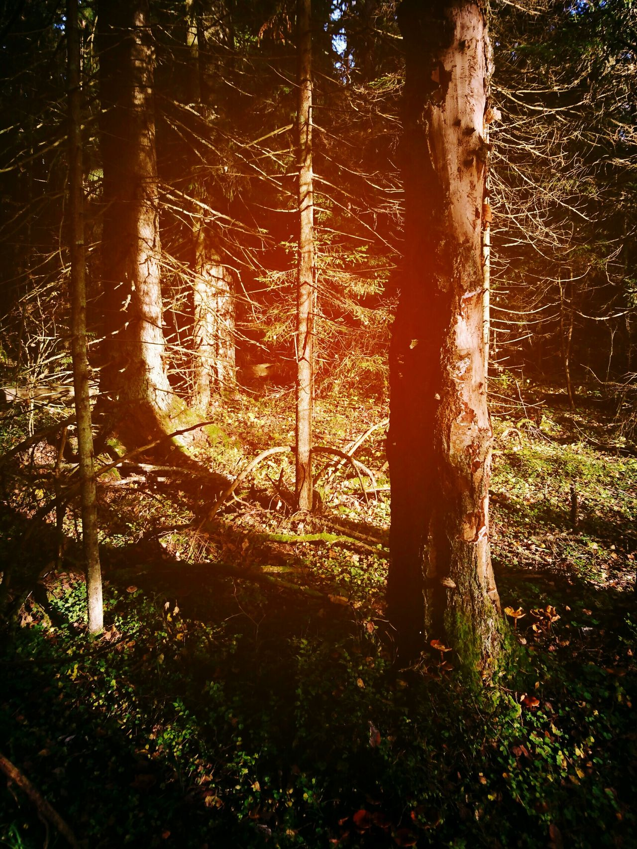 Tree Forest Forest Trees Forest Photography Nature тень Shadow Nature Photography Nature_collection Russian Nature