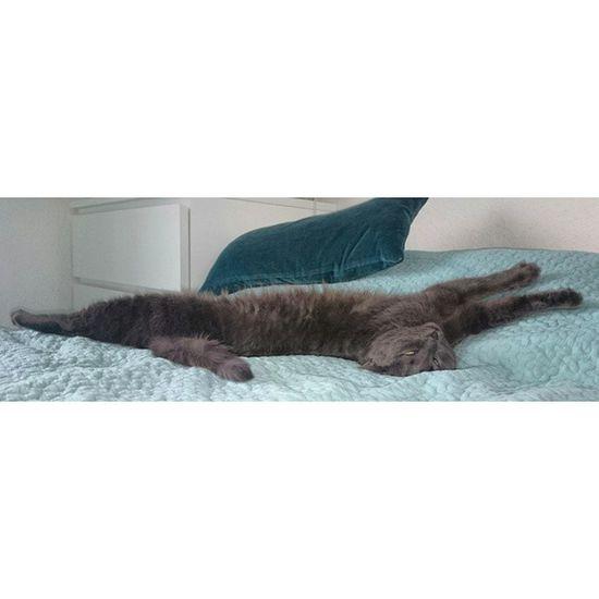 Ich hatte ja bisher geglaubt, dass nur Hunde in so irren Positionen schlafen 😁 Tshaga_the_cat