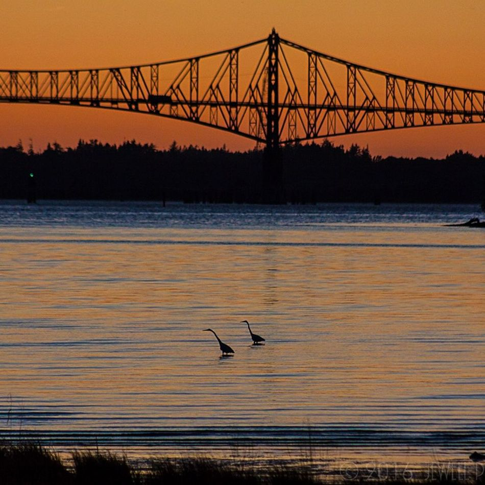 Sunset Bird Silhouette Water Wildlife North Bend Coos Bay Jewell Photography Oregon Coast Waterfront DSLR Photography Canonphotography Beauty In Nature Outdoor Photography Northbend Photography