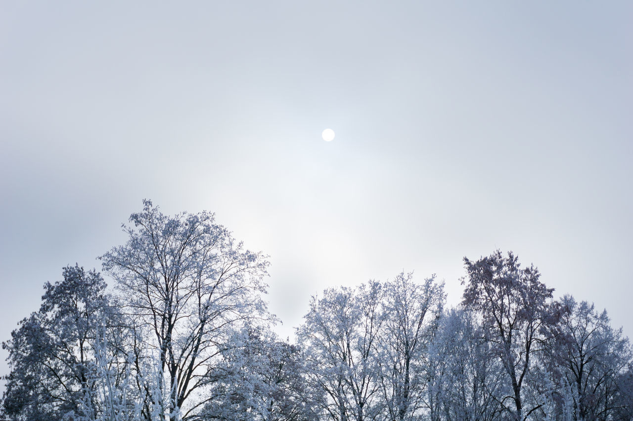Trees in winter Cloudy Cold Hoarfrost Ice Iced Landscape Low Angle View Moon Morning Nature No People Outdoor Sky Snow Snowing Sun Trees Treetop Treetops Winter