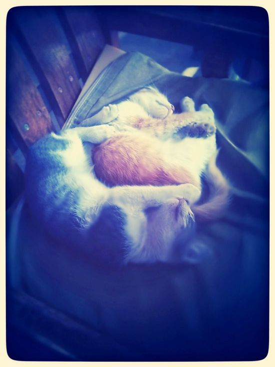 You can hardly get as cute as these two sleeping. Club Cairo Cats Dreams