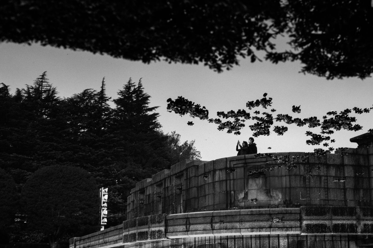 Tree Built Structure Architecture Building Exterior Outdoors No People Sky Day Nature Leicacamera EyeEm Best Shots Capture The Moment Street Photography Tokyo Street Photography Blackandwhite Monochrome 35mm Streetphotography
