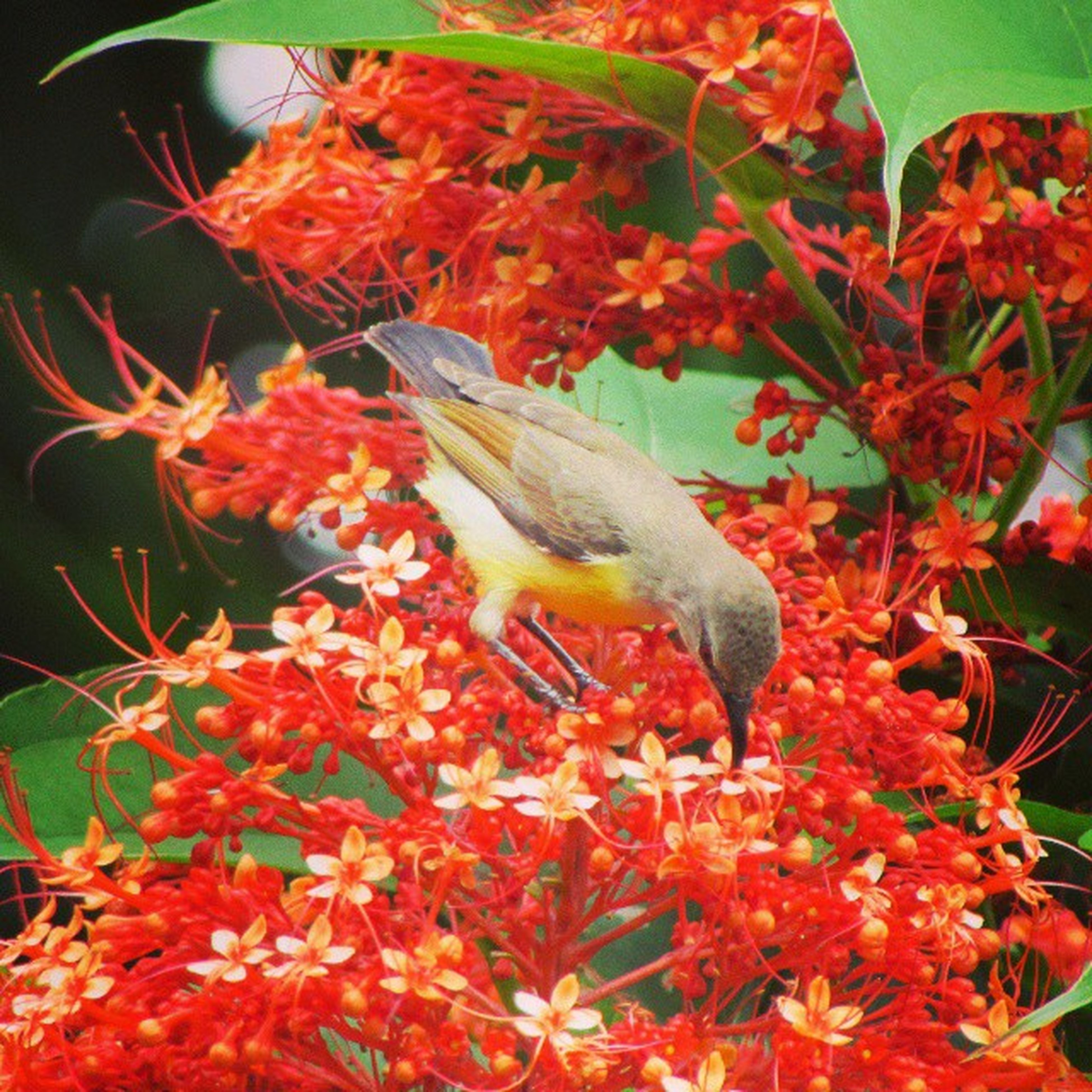 red, freshness, animal themes, flower, growth, leaf, nature, beauty in nature, plant, branch, close-up, one animal, animals in the wild, day, outdoors, no people, tree, wildlife, food and drink, bird