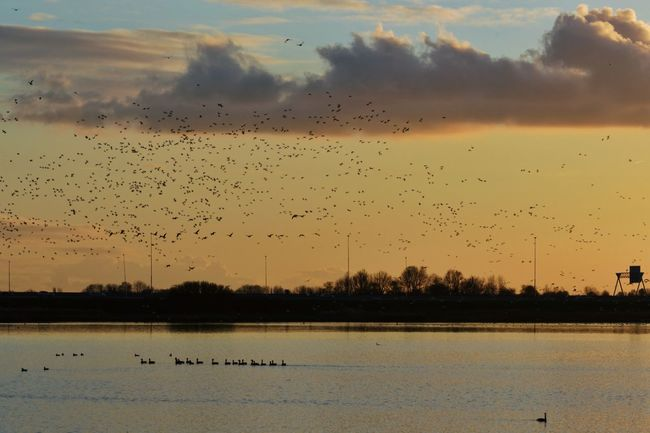 Emotional = Bewogen But Still Pretty Sunset Geese Flying Away Except One which isn't a Goose Clouds And Sky