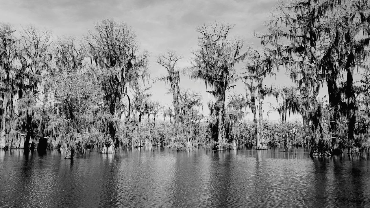 Caddo Lake Uncertain, TX Outdoor Photography Lakes, Parks, Nature Adventure Canoeing