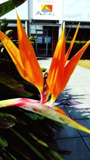 EyeEm Nature Lover Birds Of Paradise Beautiful Flowers In Bloom