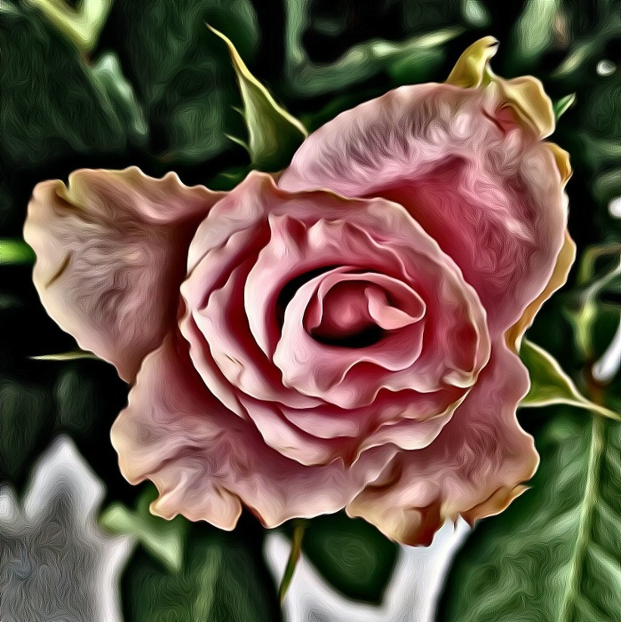 flower, petal, flower head, fragility, rose - flower, nature, beauty in nature, freshness, plant, close-up, no people, growth, day, indoors
