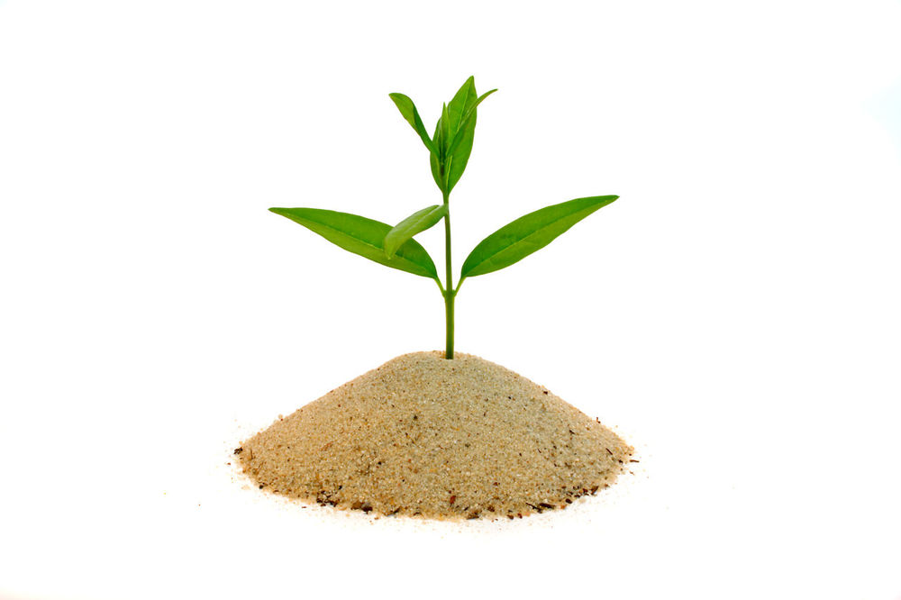 Young plant growing out of pile of sand Growing Growth Isolated White Background Metaphor Nature New Beginning Plant Seedling Start Symbolic  White Background