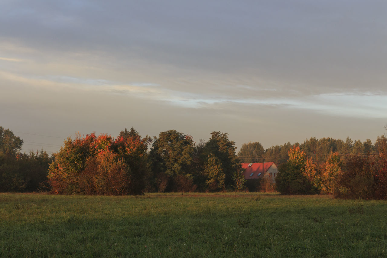 tree, nature, field, grass, beauty in nature, tranquility, landscape, autumn, sky, growth, scenics, tranquil scene, no people, outdoors, day