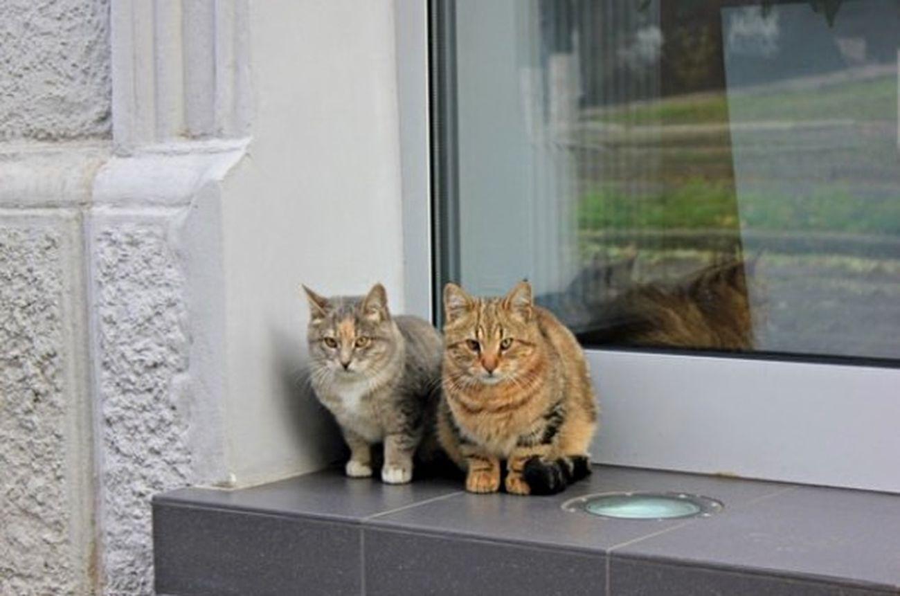 Cat Friends Homeless Cats