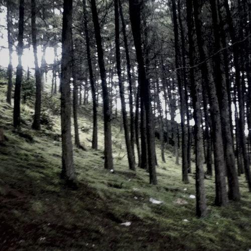 Perdida en el bosque