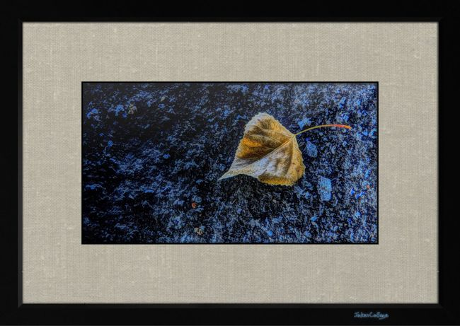 Blue And Gold Relaxing Enjoying Life Check This Out Lost Places Rotten Places Blatt Einsam Leaf 🍂 Golden Leaf