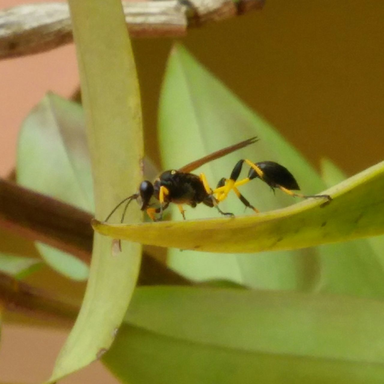 insect, animals in the wild, animal themes, one animal, no people, close-up, animal wildlife, day, leaf, outdoors, nature