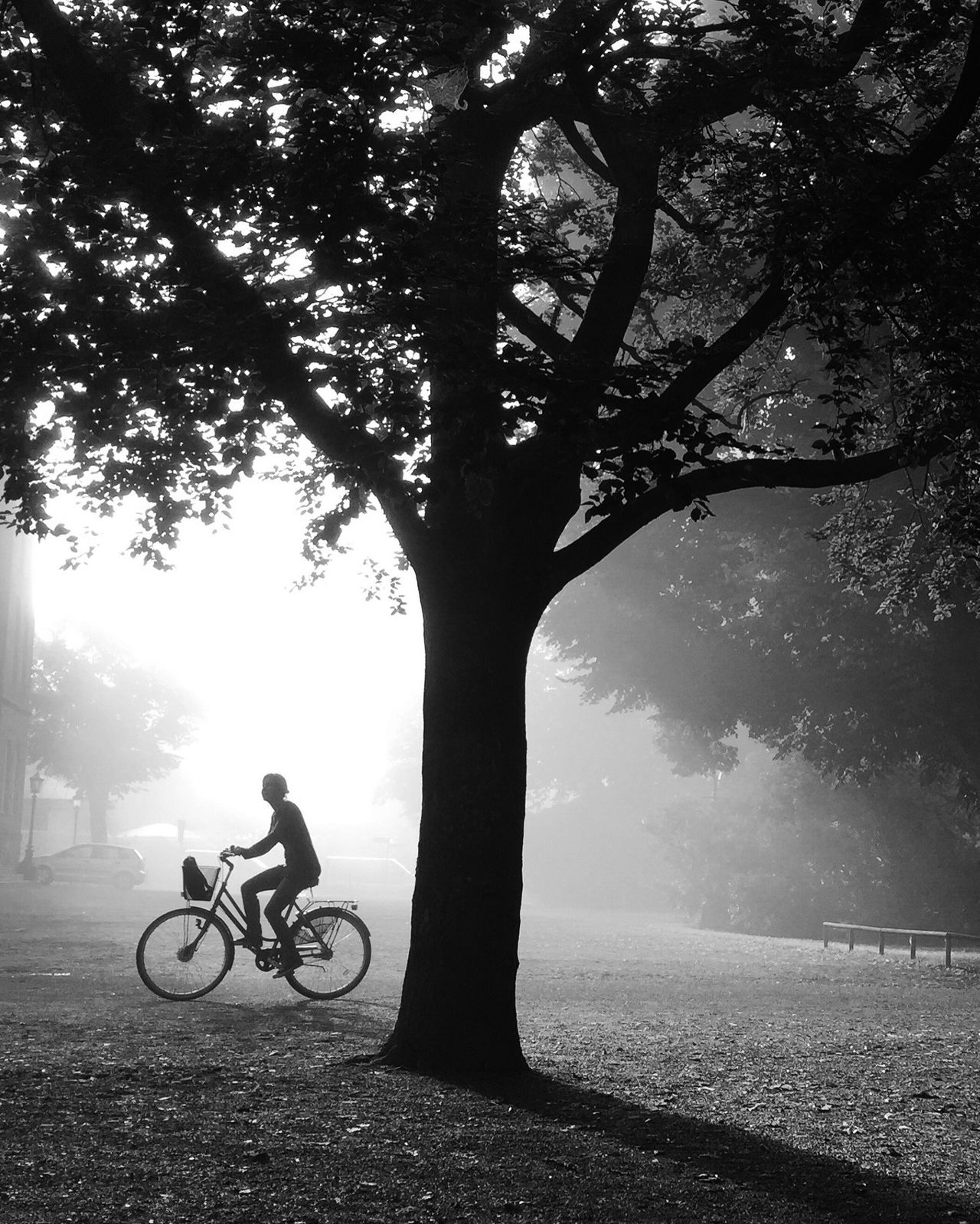 Bicycle Cycling Tree Monochrome Shootermag EyeEm Best Shots - Black + White Darkness And Light Bw_collection Silhouette