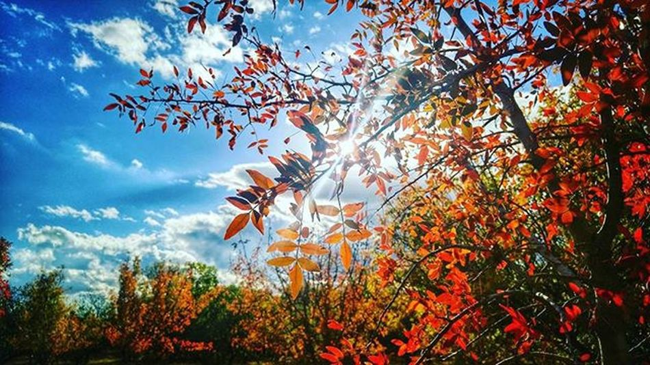 Spectacular Fall Colors ...Wintersca OrchardRoad Orchard Hike Landscape Pistachiotree