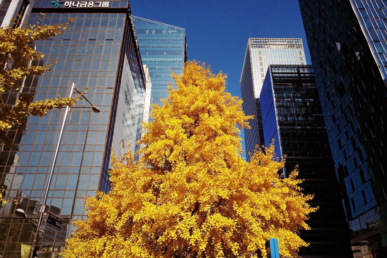 Autumn Colors Building Exterior Low Angle View City Tree Skyscraper Street Yellow Yellow Leaves