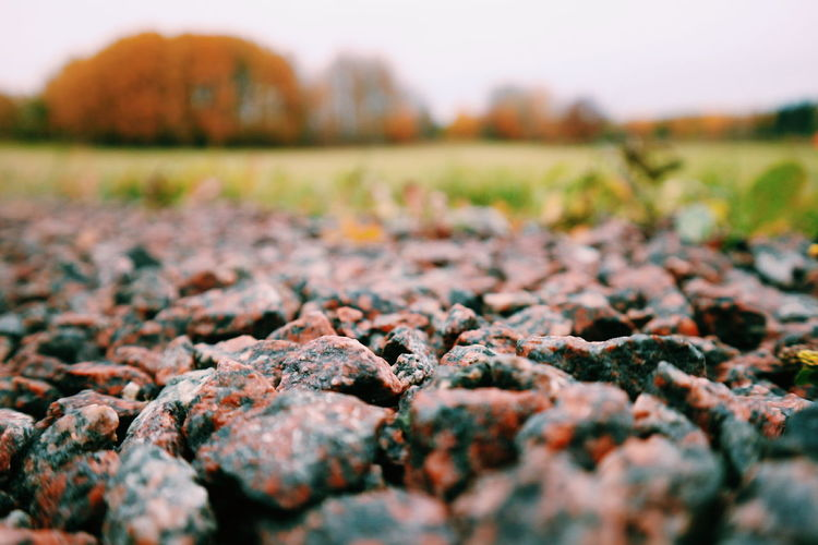 Nature Outdoors Change No People Day Autumn Close-up Horizontal Beauty In Nature Sweden Sweden-landscape Sweden Nature Autumn Colors Swedish Nature Swedish Landscape Swedish Forest Sverige Svenska Skogen Stone Grus Gravel Gravel Road Rare Moment Autumn Höst
