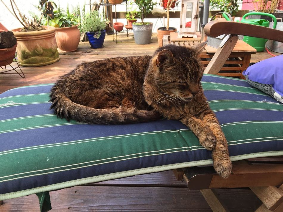 Freddie Freddie The Cat My Cat Freddie Garden Home Sunbed