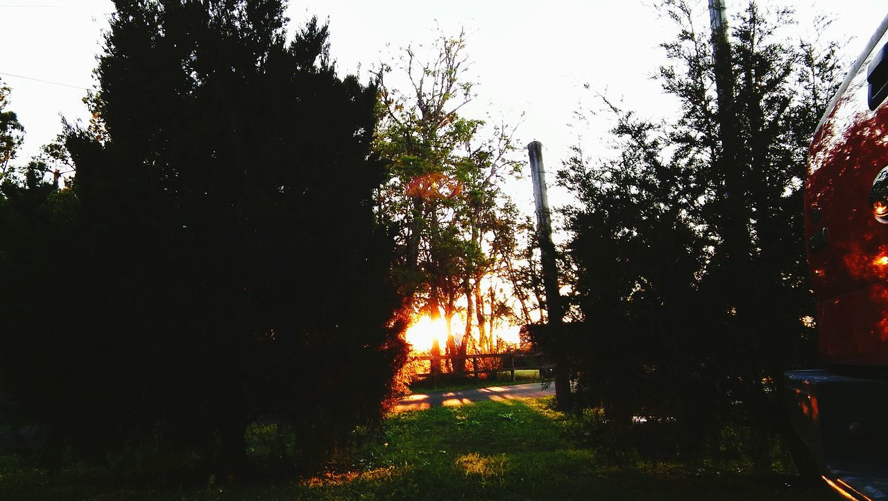 tree, nature, growth, outdoors, sunset, no people, beauty in nature, tranquility, grass, sky, day