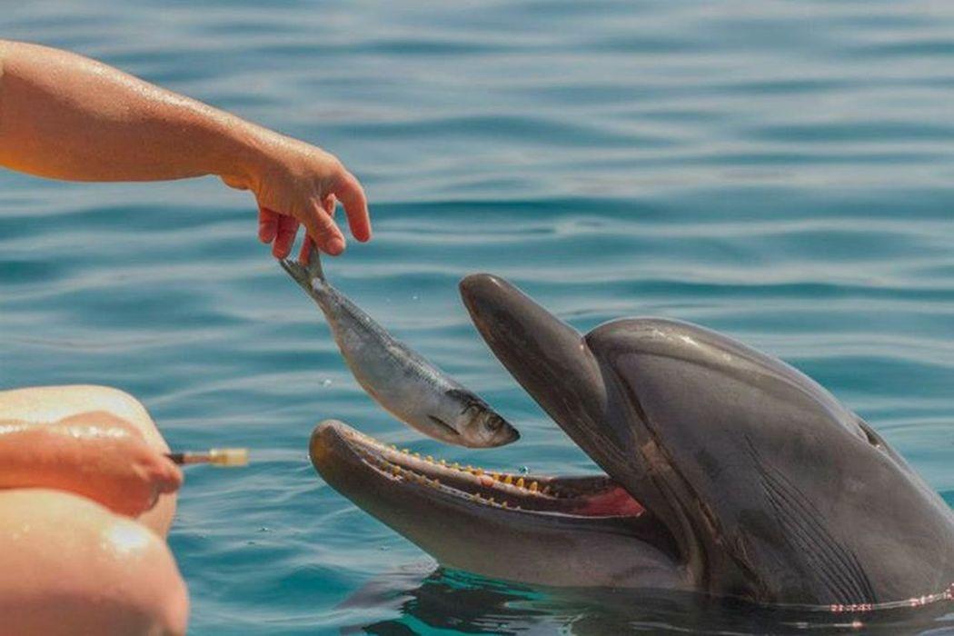 EyeEm Nature Lover Underwater Animal Dolphins Animals