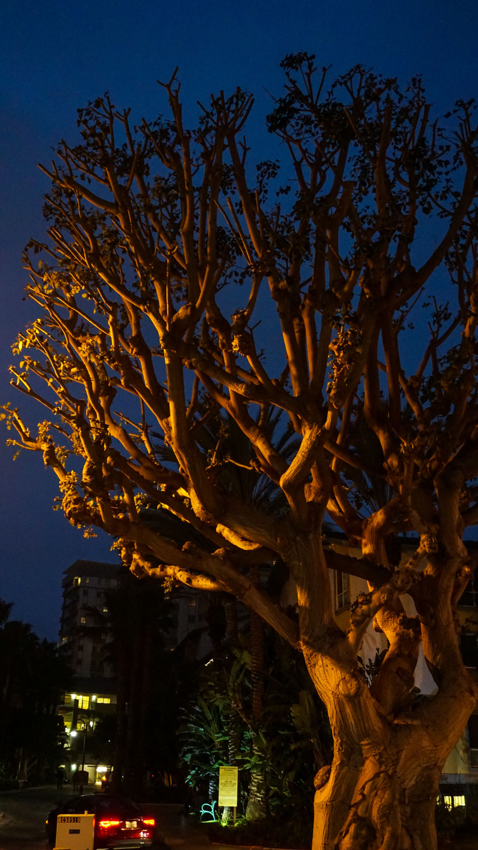 Cityscape Night Outdoors Tree No People Illuminated Perspective Randomshot Photography Eyemphotography Random Acts Of Photography SonyAlpha6000 Beauty In Nature Nature Abstract Art Justmessingaround Eye4photography  Abstract Photography EyeEmBestPics Backgrounds Sky City Sunset Vacations