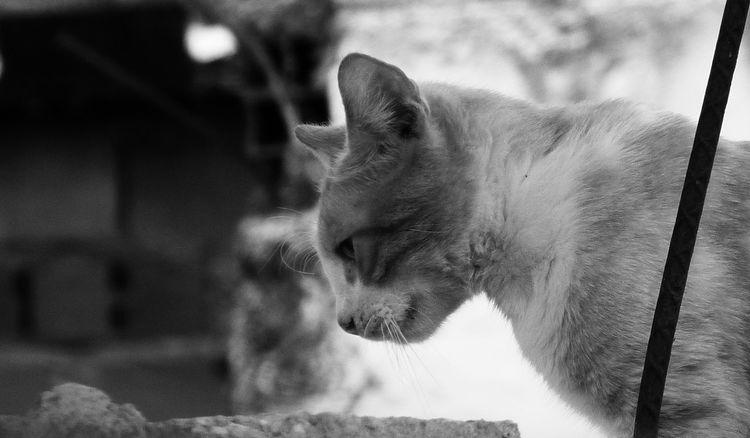 admiro la agilidad de estos felinos, combinada con su aspecto adorable, aunque a veces no lo son jeje Cat Cat Lovers Cats Cats Of EyeEm Cats 🐱 Catstagram Cat♡ Felino Felinoide Gat Gatitoo :3 Gatito♥ Gato Gatoblanco Gatos 😍 Gatosfelizes