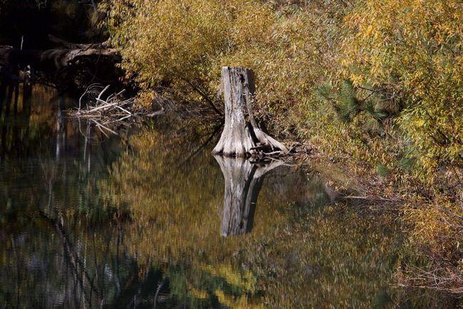 Autumn Colors fall in Yosemite valley, Merced River Tadaa Community Eye Em Around The World EyeEm Nature Lover