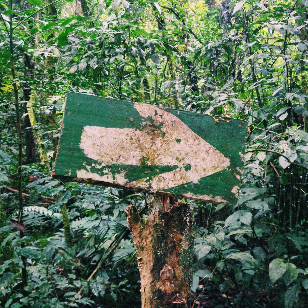Follow the Green Sign Adapted To The City Arrow Communication Day Direction Growth Guidance Hiking Nature No People Outdoors Plant Right Road Sign Sign Tree
