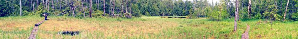 Panoramic Photography Panorama Edited My Way High Contrast Warmth Saturation Forest Photography Valley In The Woods