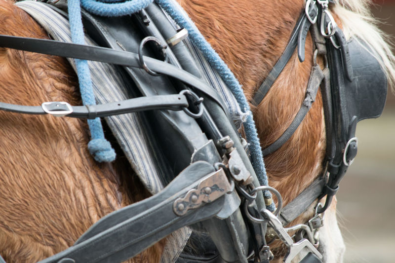 Work Horse Animal Themes Bridle Close-up Color Day Domestic Animals Harness Horse Mammal Outdoors Tack Working Animal