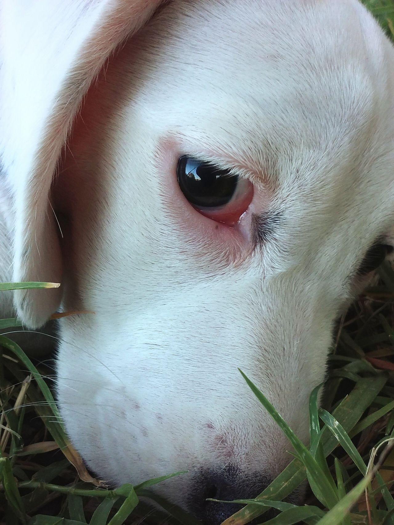 One Animal Animal Themes Pets Photography Dog Photography Dogs Life Eyes