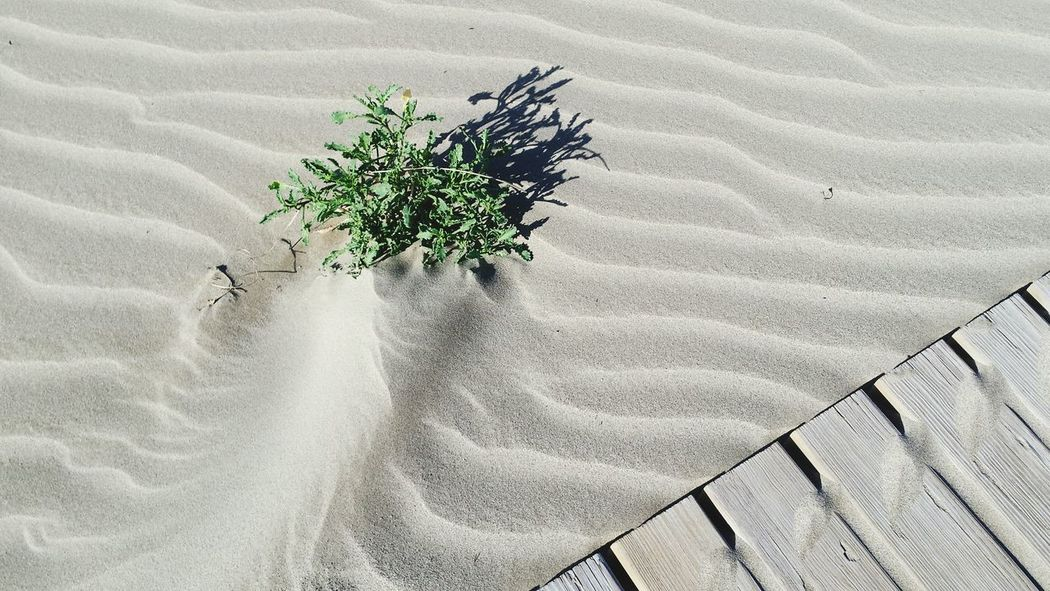 Sand Dune Textures EyeEm Best Shots Beach Beach Nature Nature Spring Mediterranean  Herbs Dunes Shapes In Nature  Shootermag