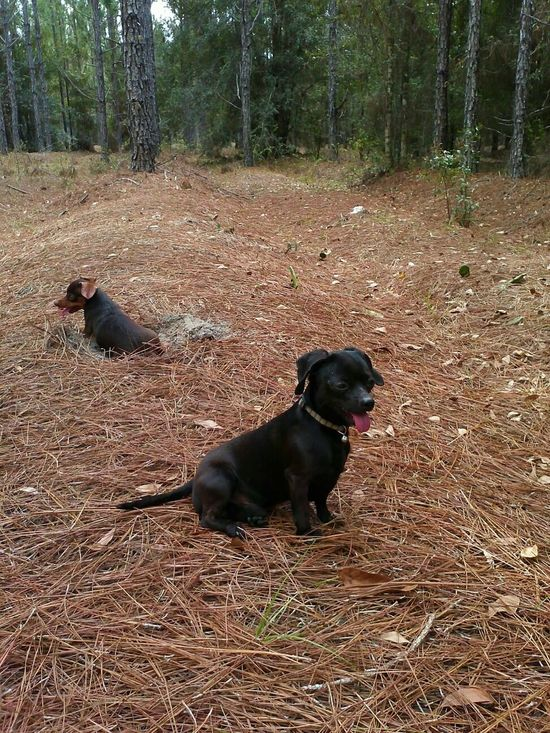 My lil pups chillin' with me in the backwoods yesterday on 3/5/15 Taking Photos Relaxing Enjoying Life What Does Peace Look Like To You?