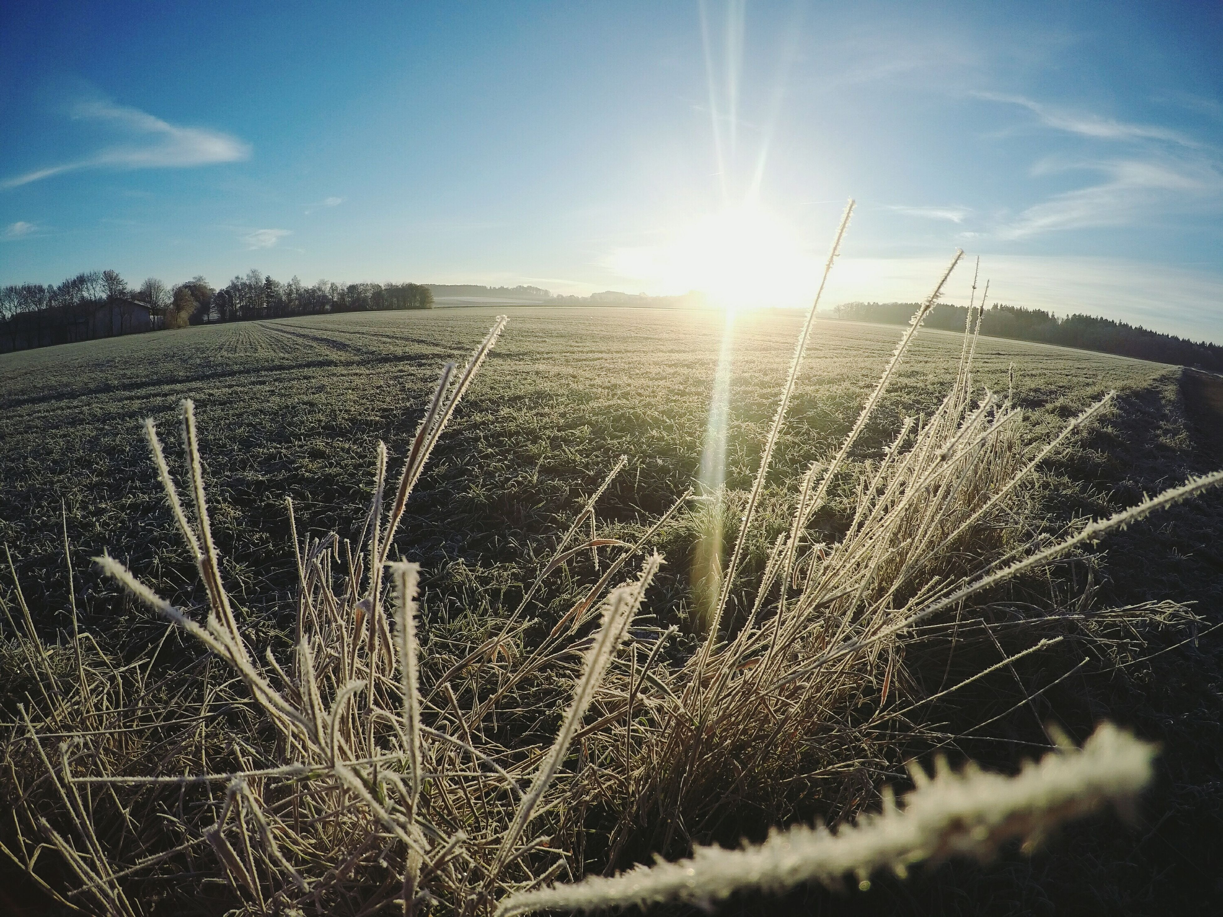-7℃ Beauty In Nature Day Agriculture Growth Rural Scene Field Crop  Farm Sunlight Cereal Plant Plant Sky Landscape Nature Sunbeam Wheat Close-up No People Outdoors Ear Of Wheat Neufarn Bavarian Landscape Bavaria Bayern Germany First Eyeem Photo