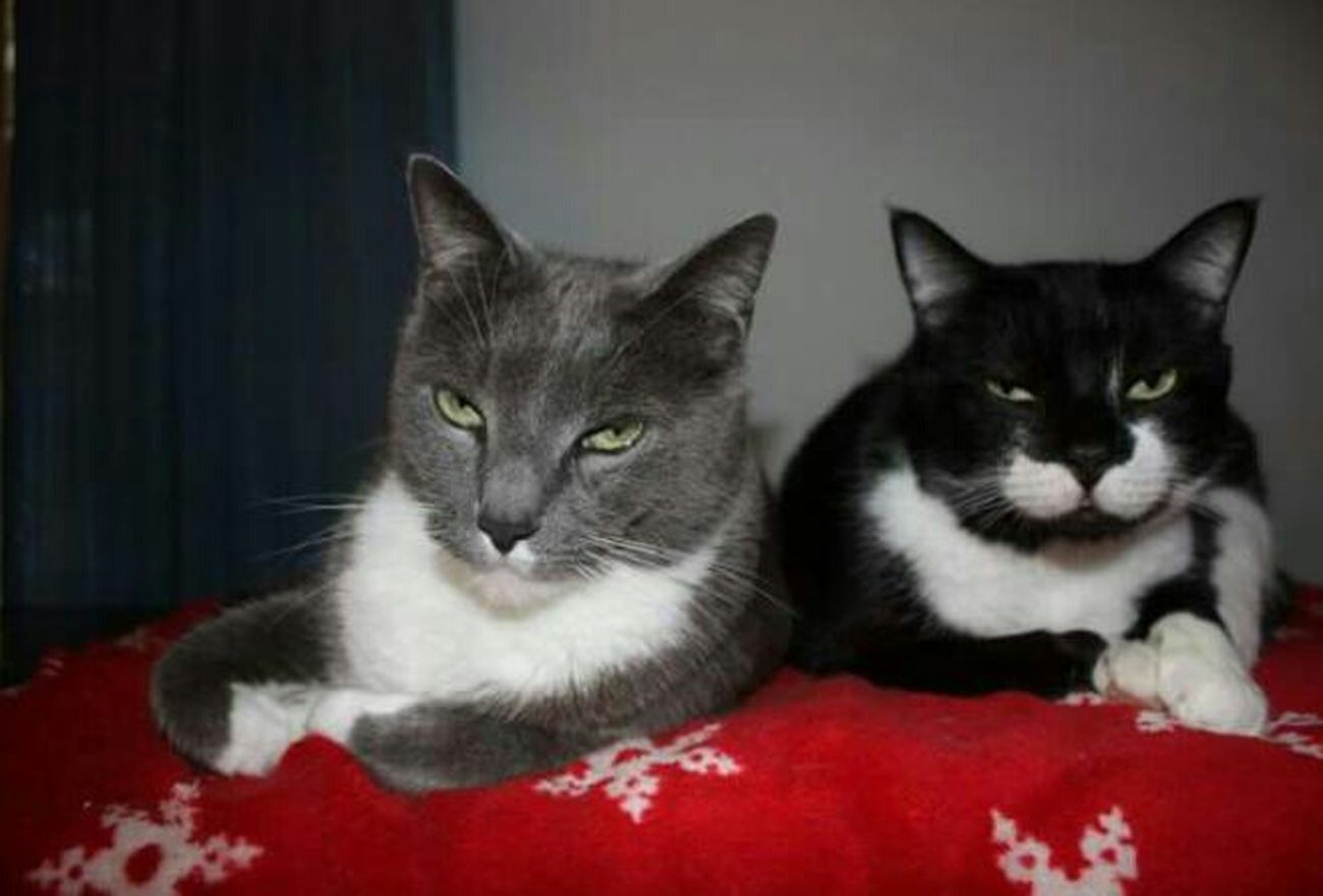 Handsome boys Brothers Handsome Boys Christmas Blanket Tom Sylvester❤ Kitty Love